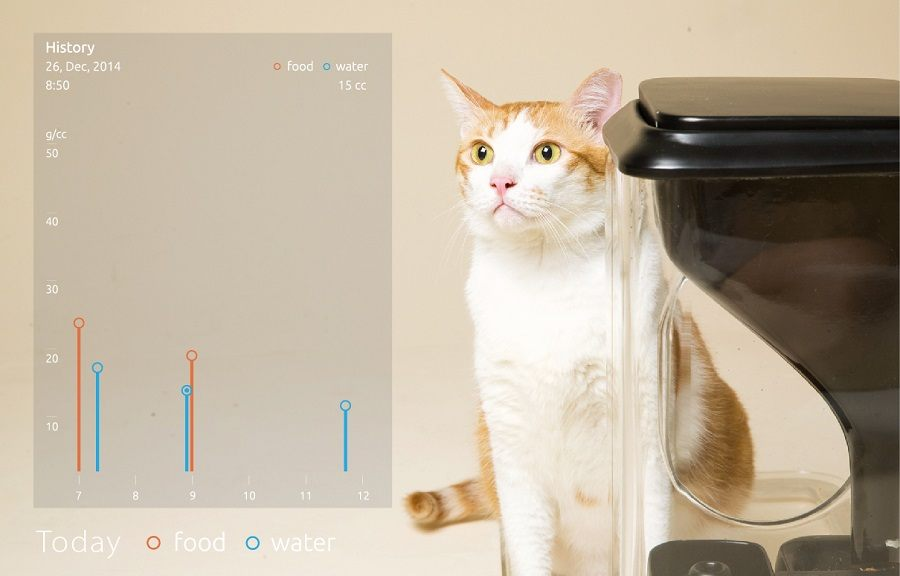 pet cat with wifi smart automatic feeder feeders hoison ideas best