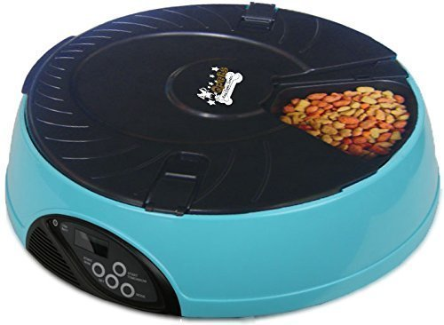automatic cat feeders featured image
