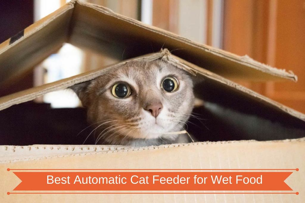 Best Automatic Cat Feeder for Wet Food New